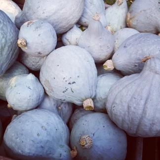 Blue Pumpkins!
